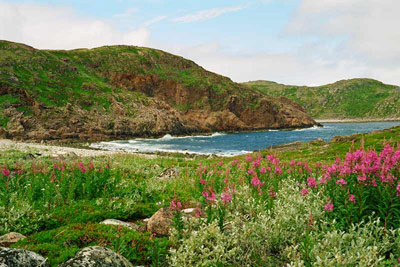 На побережье Баренцевого моря, фото Л. Ловчевой