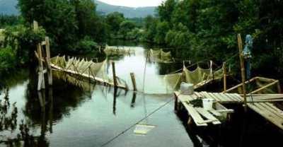 РУЗ для мальков на реке Лувеньге