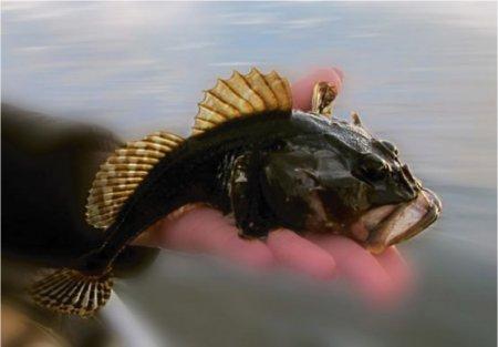 Рыбалка в Кандалакшском заливе