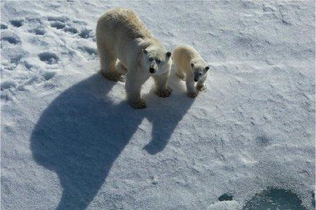 "О. Бундур: ""В гостях у белого  медведя"""