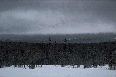 Лес темной стеной