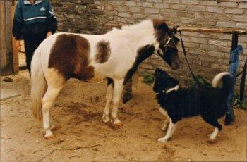23 года назад в Кандалакше возник клуб «Ветер в гриве»